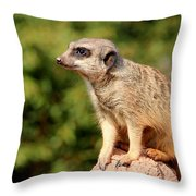 Meerkat 1 Throw Pillow