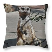 Meerkat 2 Throw Pillow