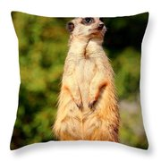 Meerkat 2 Throw Pillow