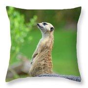 Meerkat Throw Pillow