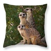 Meerkat Hill Throw Pillow