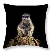 Meerkat Lookout Throw Pillow