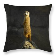 Meerkat On The Watch Throw Pillow