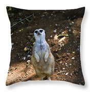 Meerkat Poising Throw Pillow
