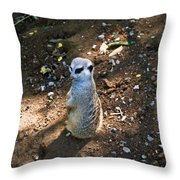 Meerkat Responding Throw Pillow
