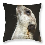Meerkat#1 Throw Pillow