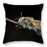 Megachilidae Throw Pillow