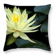 Mellow Yellow Water Lily Throw Pillow