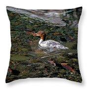 Merganser And Spawning Salmon - Odell Lake Oregon Throw Pillow