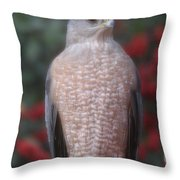 Coopers Hawk I Throw Pillow