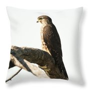 Merlin Hunting Throw Pillow