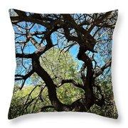 Mesquite Window Throw Pillow