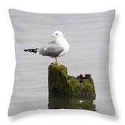 Mew Gull On A Piling Throw Pillow