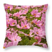Mexican Aster Flowers 1 Throw Pillow
