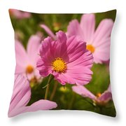 Mexican Aster Flowers 2 Throw Pillow