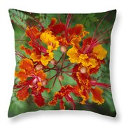 Mexican Bird Of Paradise Throw Pillow