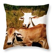 Mexican Cattle Throw Pillow