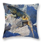Mexican Iguana Throw Pillow