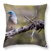 Mexican Jay Throw Pillow