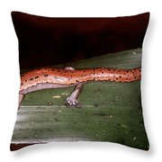 Mexican Palm Salamander Throw Pillow