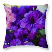 Mexican Petunia  Throw Pillow