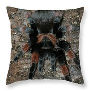 Mexican Redleg Tarantula Throw Pillow