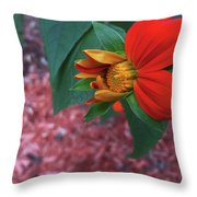 Mexican Sunflower In Mid Bloom Throw Pillow