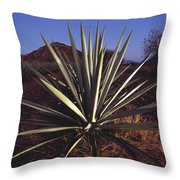 Mexico, Oaxaca, Field Of Agave Plants Throw Pillow