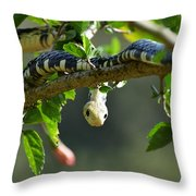 Mica On The Hunt Throw Pillow