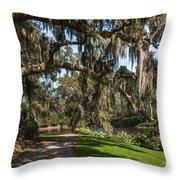Middleton Live Oak Stretch Throw Pillow
