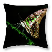 Midnight Butterfly Throw Pillow
