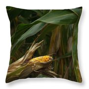 Midwest Harvest Throw Pillow