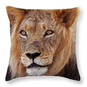 Mighty Lion In South Africa Throw Pillow