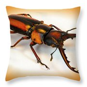 Military Stag Beetle Throw Pillow