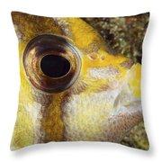 Milletseed Butterflyfish Throw Pillow
