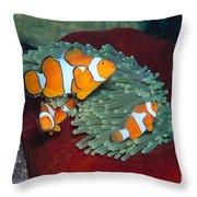 Milne Bay, Marine Throw Pillow