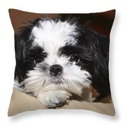 Milo Throw Pillow