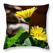 Miniature Yellow Gerbera Daisies Throw Pillow