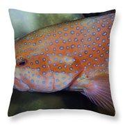Miniatus Grouper - Cephalopholis Miniata Throw Pillow