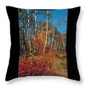 Minnesota  Autumn Path Throw Pillow