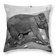 Minnie The Elephant, 1920s Throw Pillow