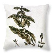 Mint Plant, 1735 Throw Pillow