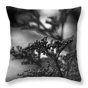 Mirrored In Sterling Throw Pillow