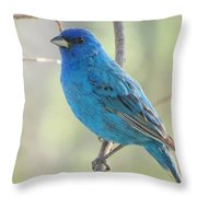 Mister Indigo Throw Pillow