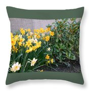 Mixed Daffodils Throw Pillow