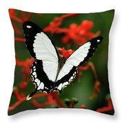 Mocker Swallowtail Throw Pillow