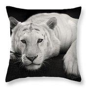 Mohan The White Tiger Throw Pillow