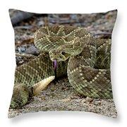 Mohave Green Rattlesnake Striking Position 3 Throw Pillow