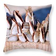 Mollusks On Wood Plank Throw Pillow