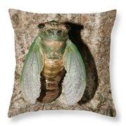 Molting Cicada #2 Throw Pillow